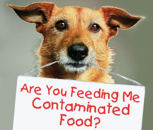 Contaminated-food